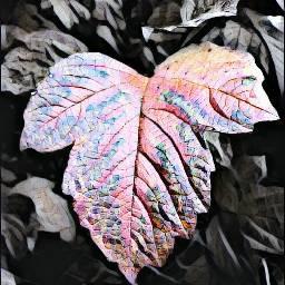 photography crushedmarble leaf leafs fences