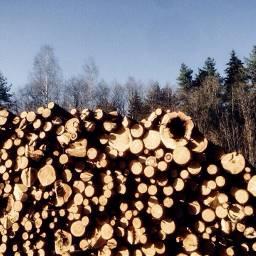 freetoedit art summer logs trees