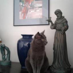 dpccats cat cats catlover statue